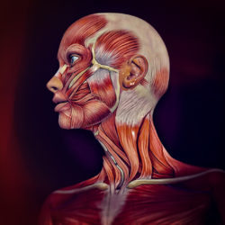Neck Pain can be a debilitating health problem. Your head is heavy and balanced on a narrow support made up of seven bones called vertebrae. The vertebrae are separated from each other by discs, stabilised by joints and ligaments and moved by muscles.
